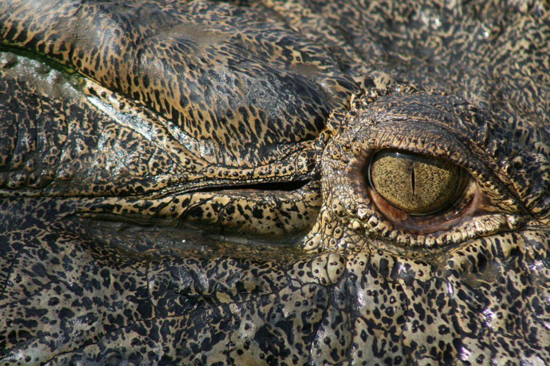 Sophisticated Gators